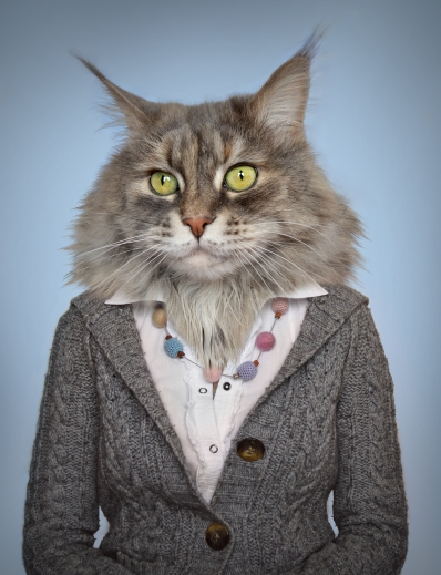 cat in clothes
